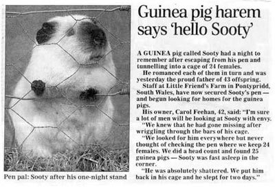 Sooty the Legend